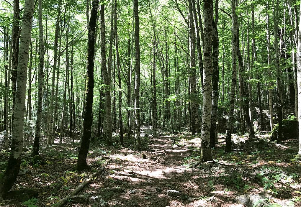 bosques ordesa